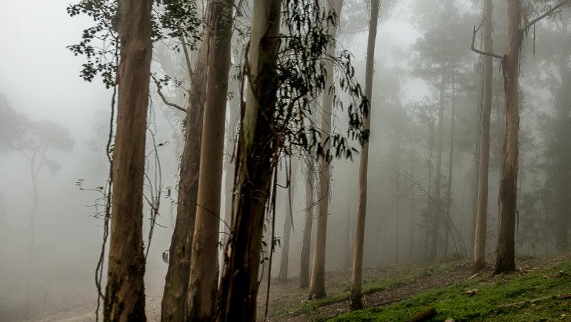 Misty Woods Around the Convent