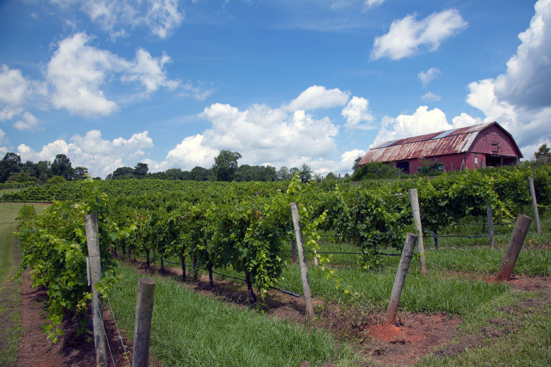Three Sisters Vineyard