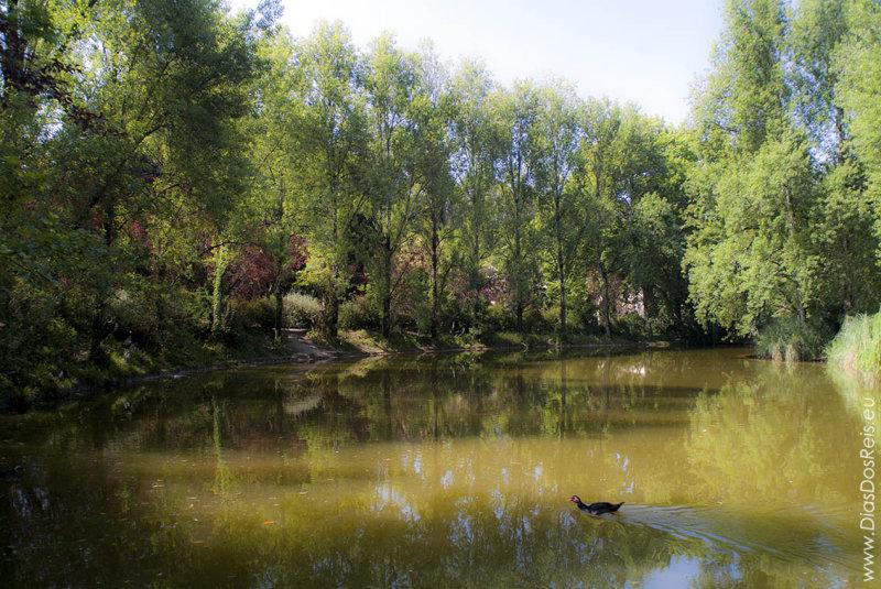 O Parque D. Carlos em 12 de junho de 2003