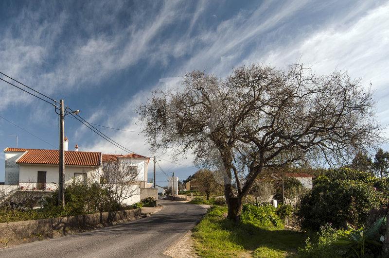 Carvalho-português (Árvore de Interesse Público)