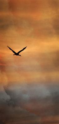 Corrales Cranes