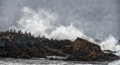 Cormorants, Pescadero Point, CA