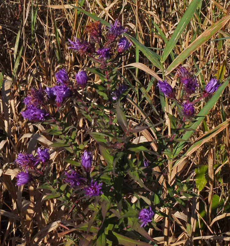 Wildflowers City Forest 10-3-17.jpg