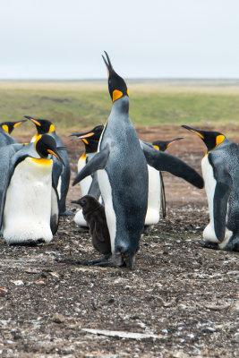 2017 Falkland Islands