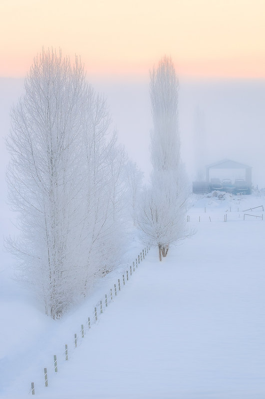 Sunrise Frost and Fog