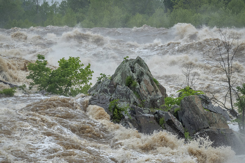 Oasis in a raging river