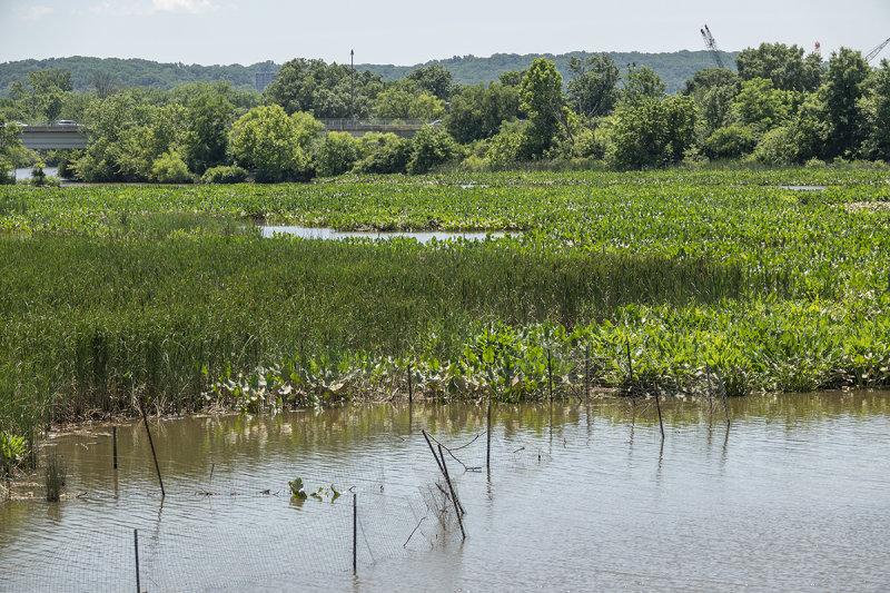 Kingman wetlands