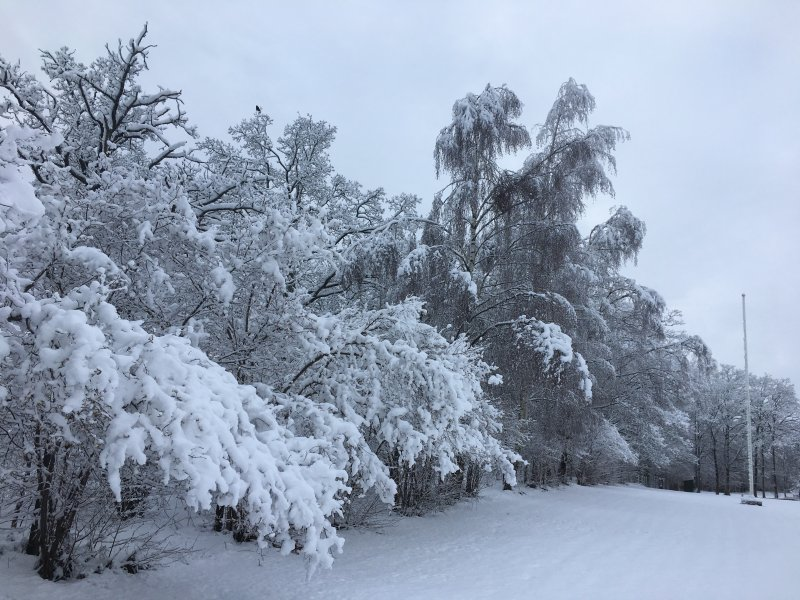 Heavy snow.jpg