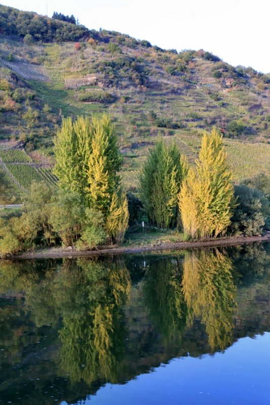 Autumn in the Moselle
