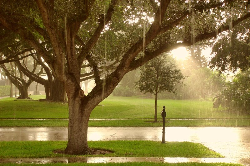 Classic Florida Sunshower  WDW360com  Your 360° View of all Things Disney # Sun Shower Eli_082440