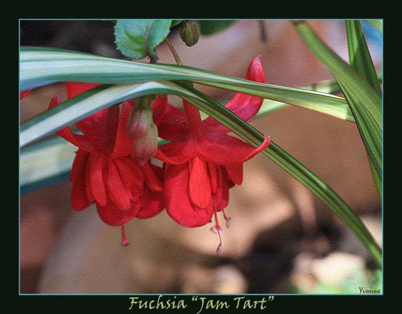 Fuchsia Jam Tart