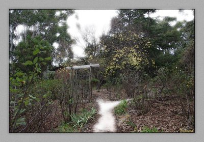 One of the top pathways thru the garden