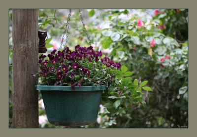 Hanging basket in the gazebo