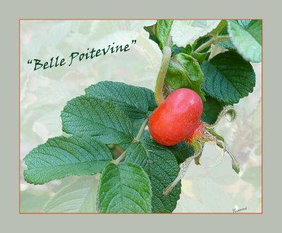 Belle Poitevine hip