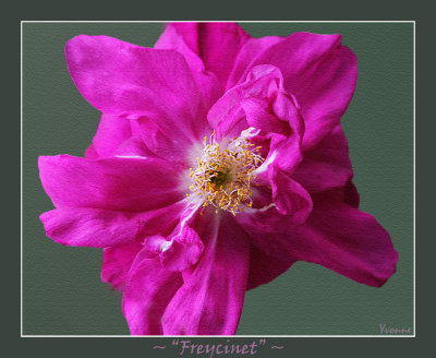 Freycinet