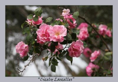 Cicely Lascelles