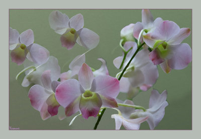Orchids from the Bouquet