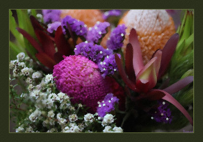 Southern Hemisphere Wildflowers