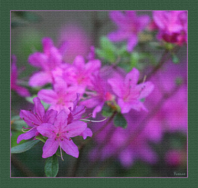 Shrubs & small flowering trees