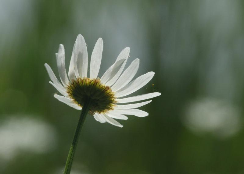 166:365<br>array of petals