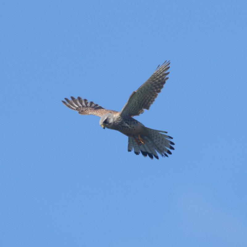 188:365<br>hovering for prey
