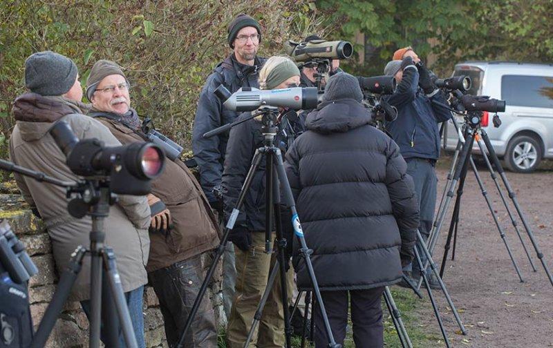 Birders at Ottenby