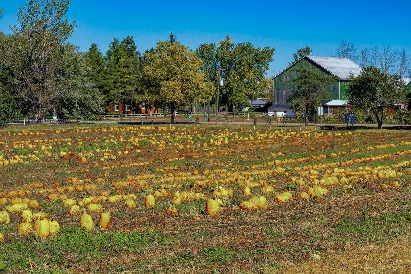 Hutchinson Farm 1