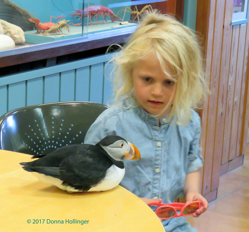 Toti the puffin and a little girl!