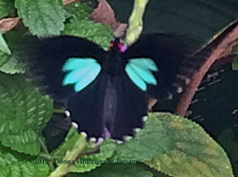 At Canopy Lodge, A butterfly on the Verbena