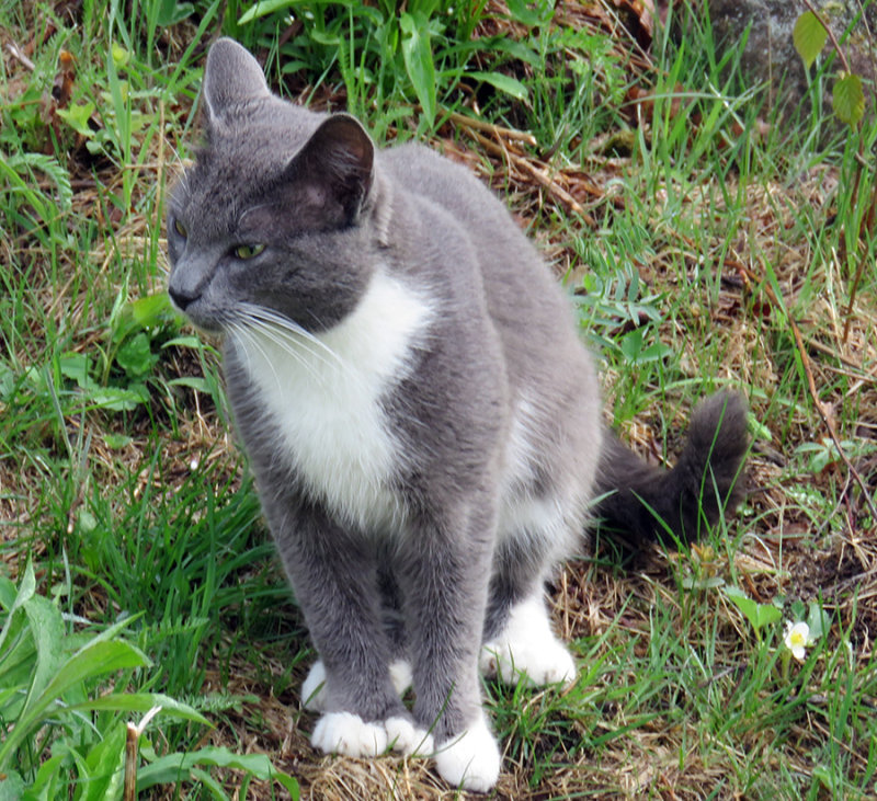 Tomas the kitty visiting our hill.
