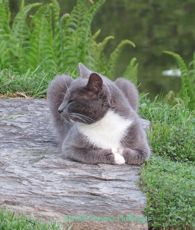 Thomas The Kitty on Eccopond