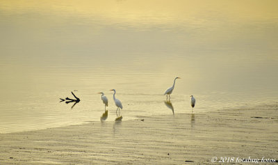Egret Beach Party