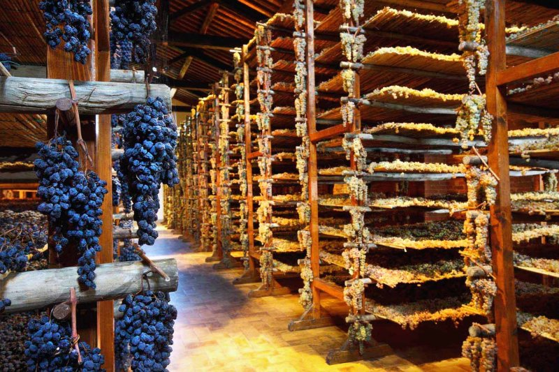 Wines Drying in Verrazano Castello