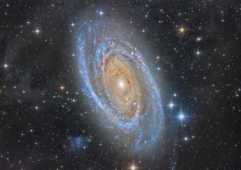 M 81 and IFN
