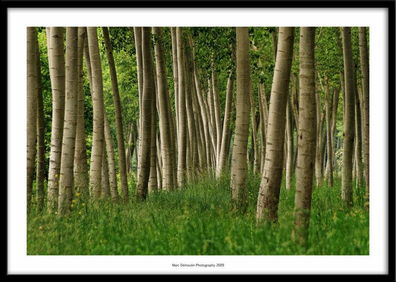 Wood, Sainte-Bazeille, France 2009