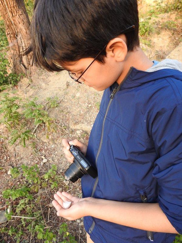 Hunt for bird eggs