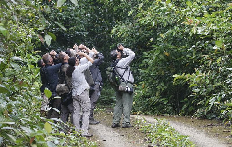 Unified birding at Waigeo