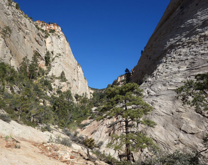 Zion- At the top of the many pools route. Our plan was to bushwack up the brushy canyon onto the plateau