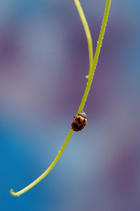 A Ladybug<br><h4>*Merit*</h4>