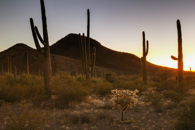 Sunset At Organ Pipe National Monument, Arizona