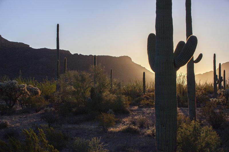 Sunrise At Organ Pipe National Monument