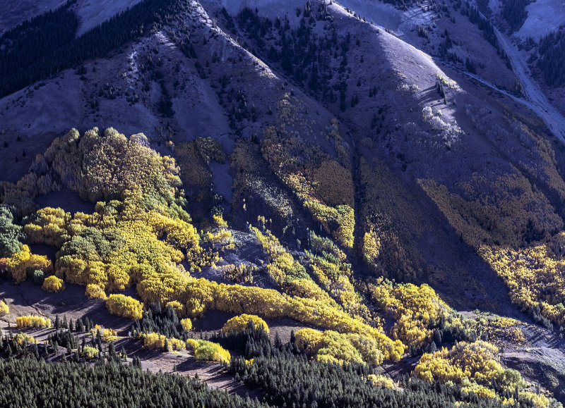 An Aerial View Near Gunnison Colorado: Aspen Patterns In Light And Shadow