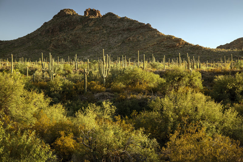 Late Light At Organ Pipe National Monument, Arizona