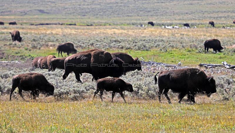 1997 - Grand Teton and Yellowstone NP road trip 2019 - IMG_3859 DxO pbase.jpg