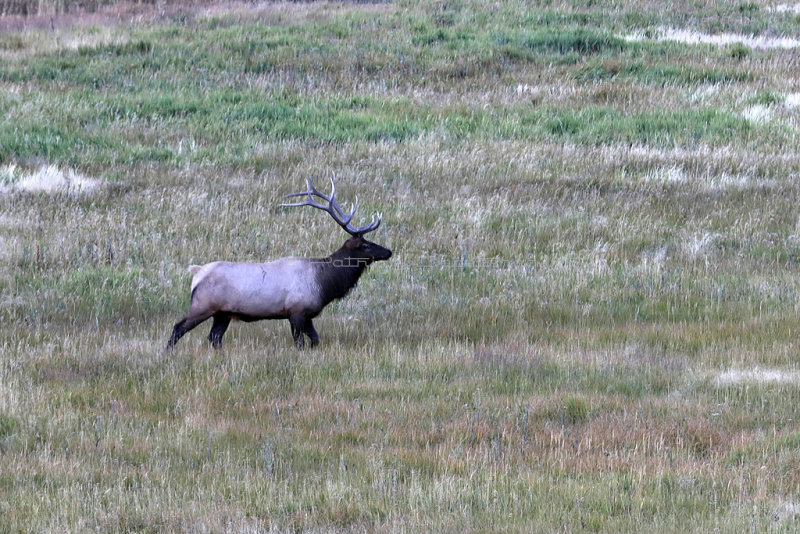 5299 - Grand Teton and Yellowstone NP road trip 2019 - IMG_7233 DxO Pbase.jpg
