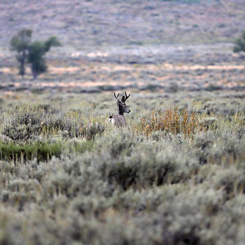 6344 - Grand Teton and Yellowstone NP road trip 2019 - IMG_8229 DxO Pbase.jpg