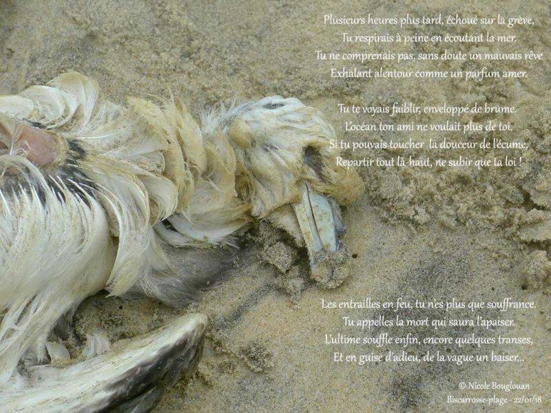 382- Northern Fulmar poem