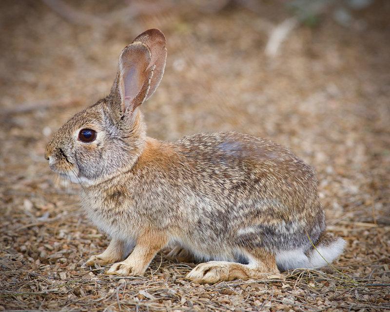 Riparian Preserve : I like bunnies rabbits