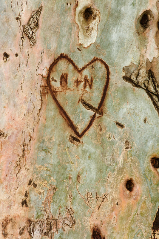 A Tree with Romance : Scottsdale