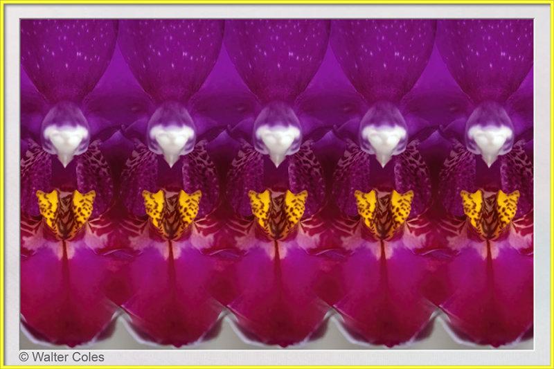 Orchid_Sony_FE_90G_92119_17_Lens_Effects_Frame_w.jpg